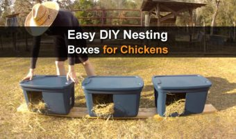 Easy DIY Nesting Boxes For Chickens