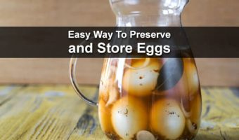 Easy Way To Preserve and Store Eggs