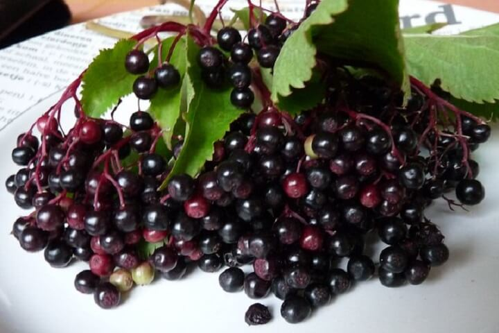 Elderberries on a Plate