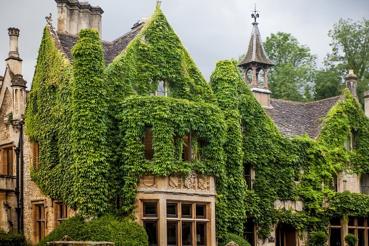 English Ivy Covering Old House