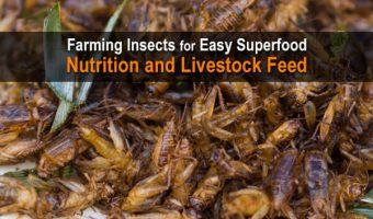 Farming Insects for Easy Superfood Nutrition and Livestock Feed