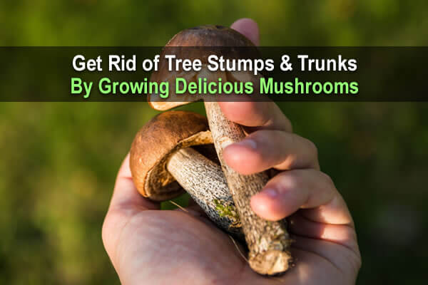 Get Rid of Tree Stumps & Trunks By Growing Delicious Mushrooms