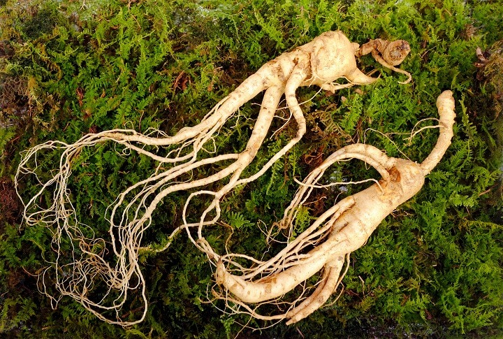 Ginseng Root On Ground