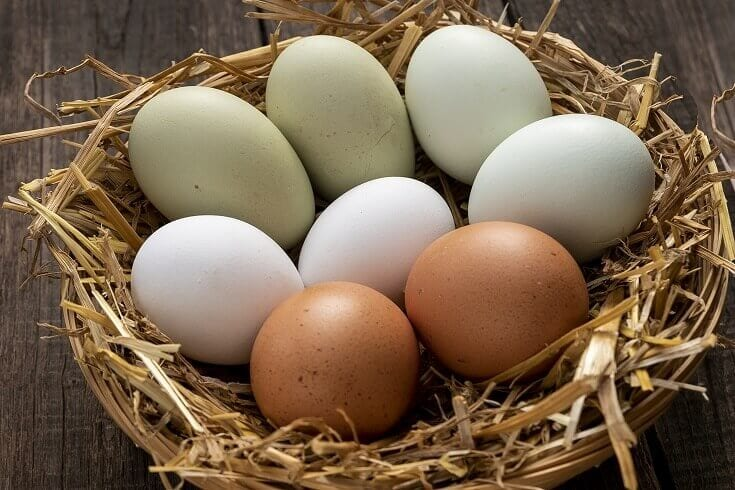 Green White and Brown Eggs