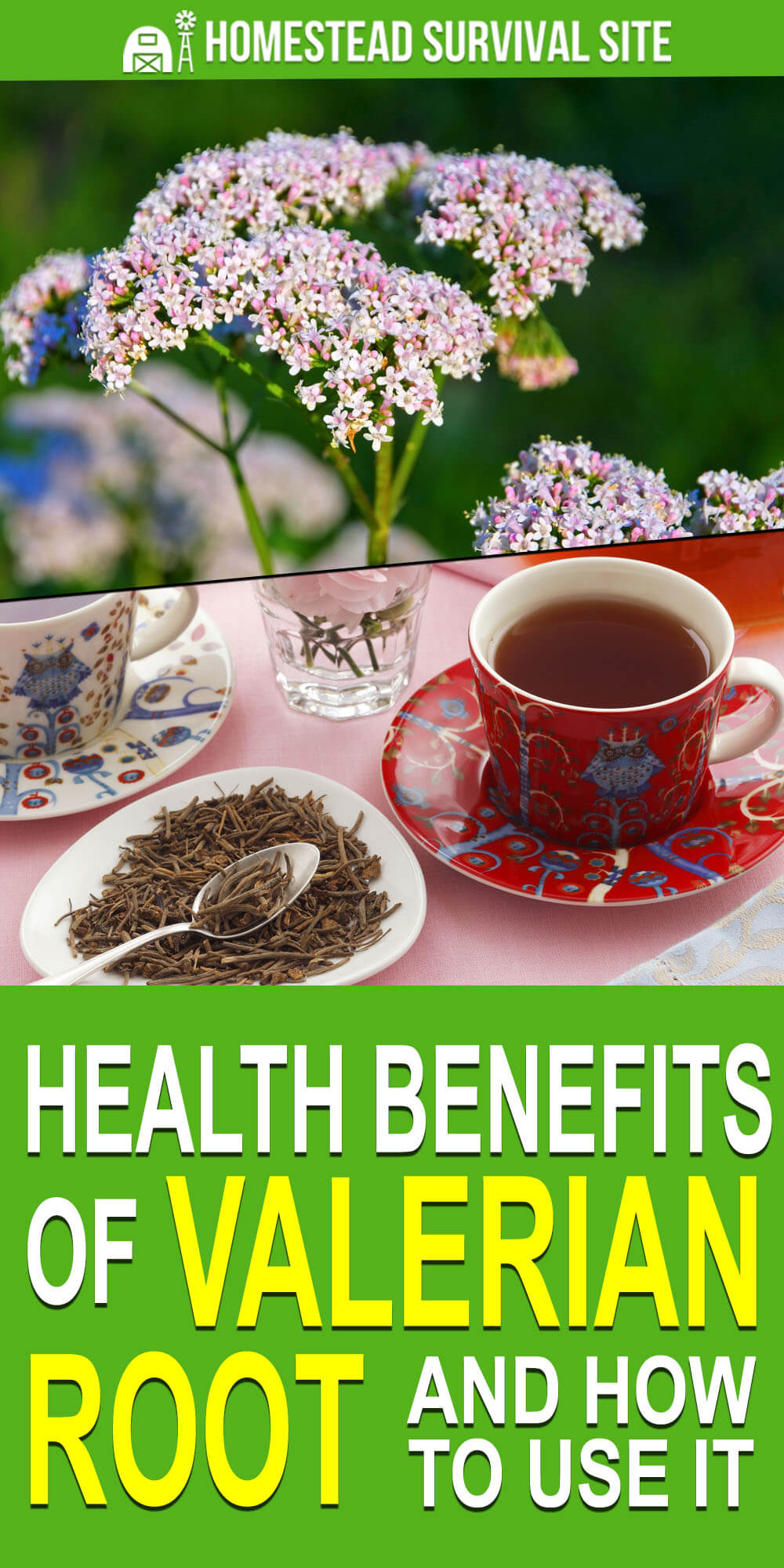 Health Benefits of Valerian Root and How to Use It