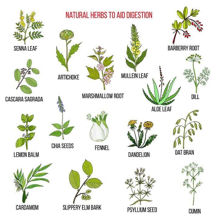Herbs to Aid Digestion