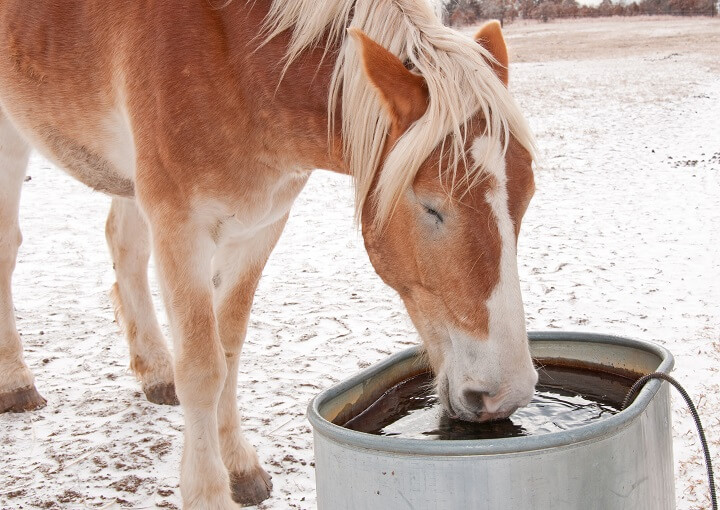 Horse in the Winter Drinking