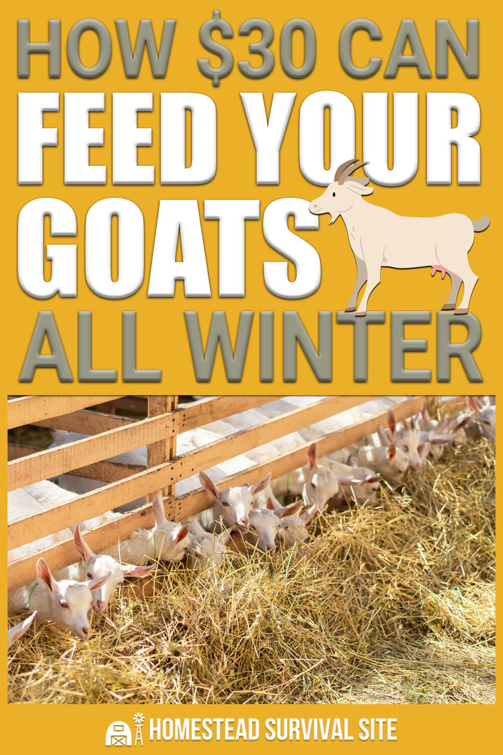 How $30 Can Feed Your Goats All Winter
