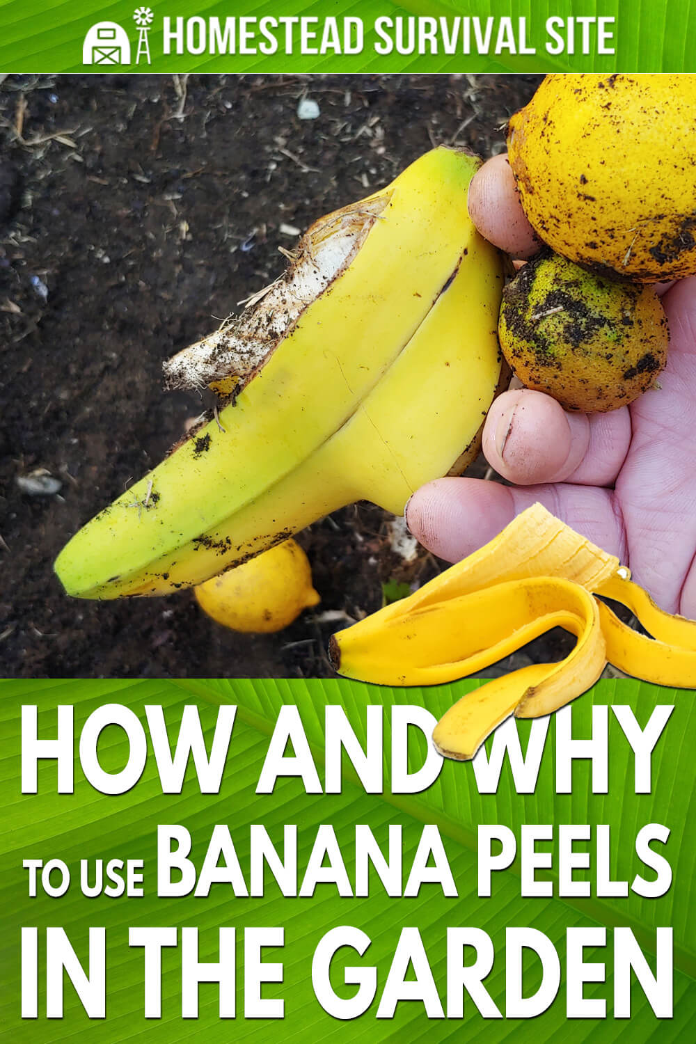 How and Why to Use Banana Peels in the Garden
