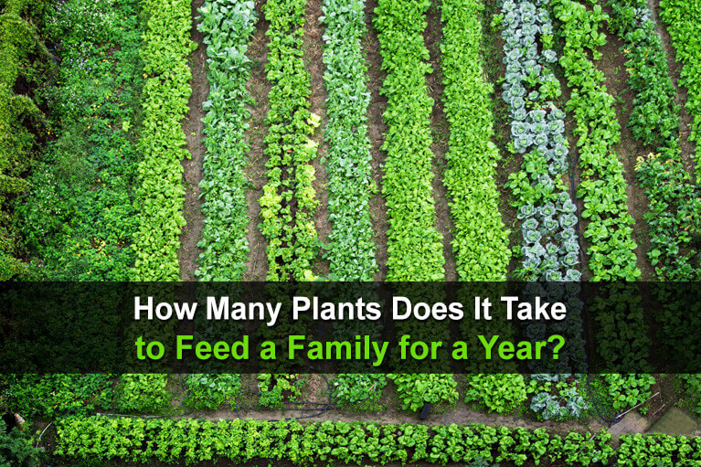 How Many Plants Does It Take to Feed a Family for a Year?