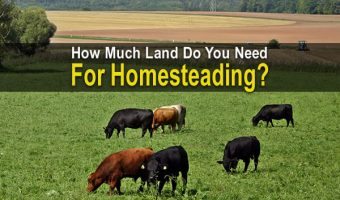 How Much Land Do You Need For Homesteading?