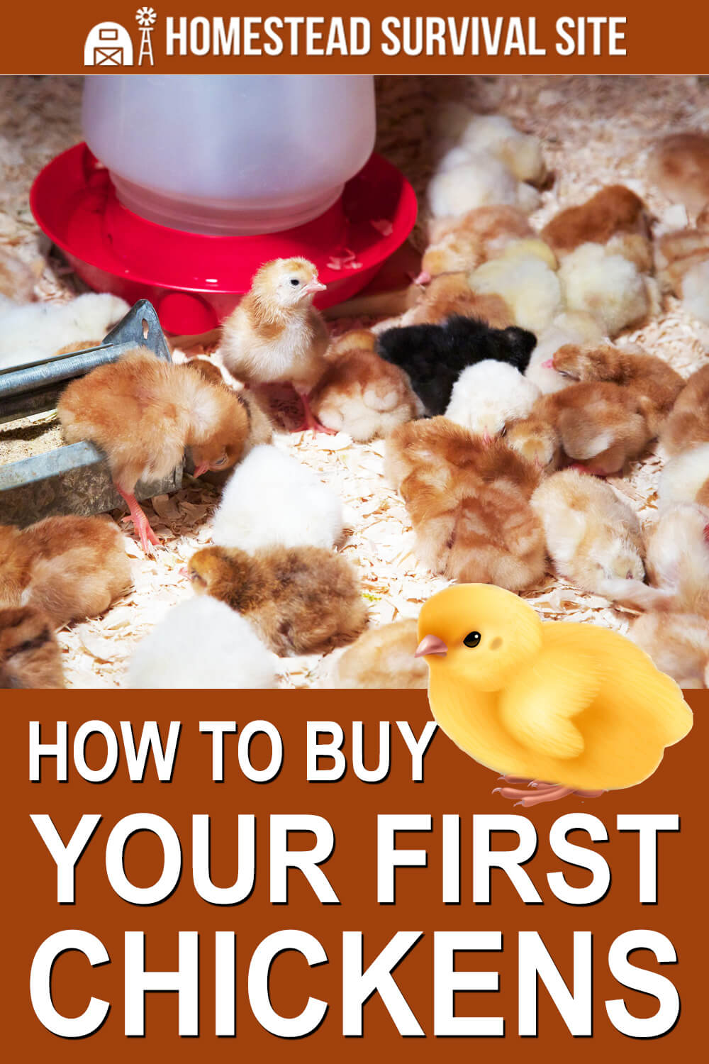 How to Buy Your First Chickens