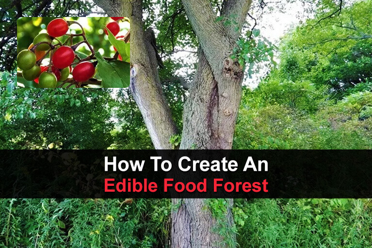 How To Create An Edible Food Forest