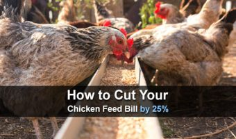 How to Cut Your Chicken Feed Bill by 25%