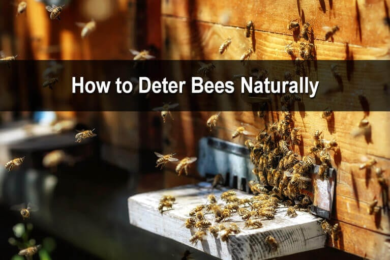 How to Deter Bees Naturally