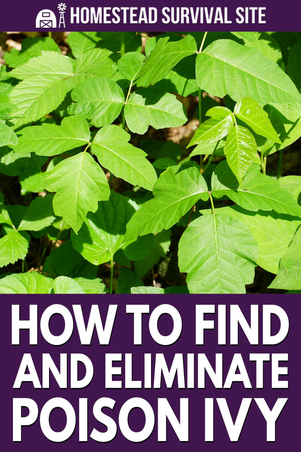 How To Find And Eliminate Poison Ivy