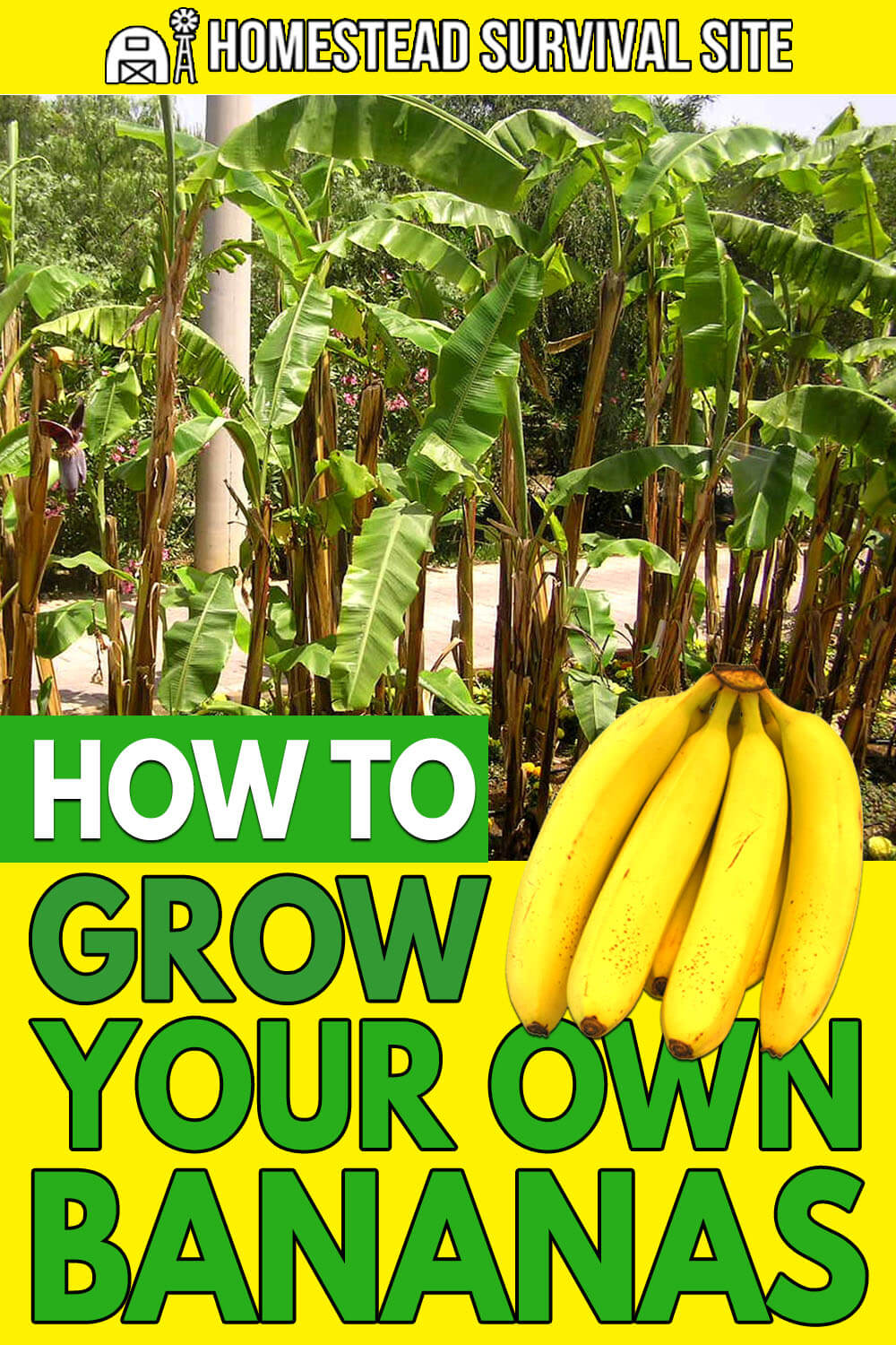 How to Grow Your Own Bananas