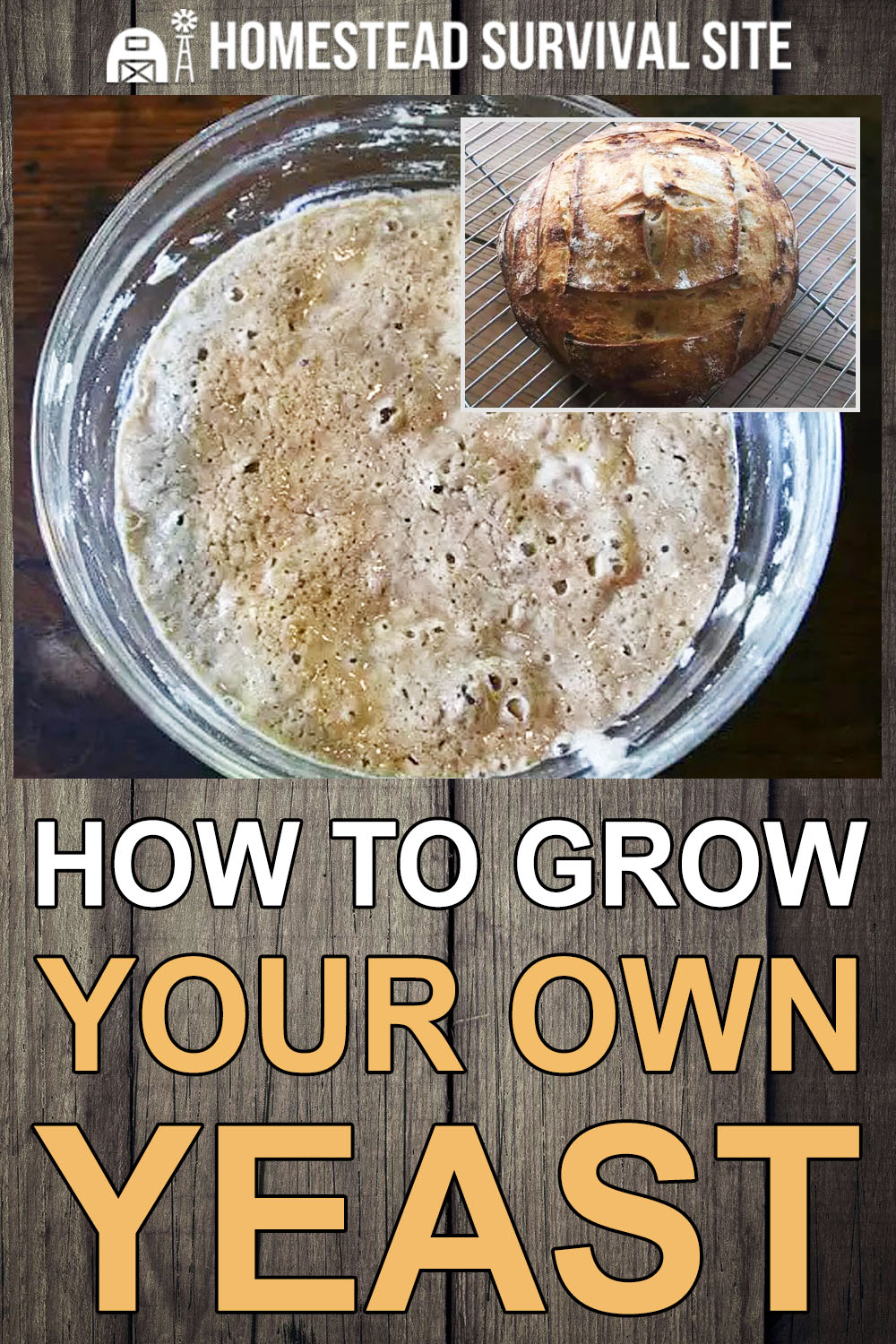 How to Grow Your Own Yeast