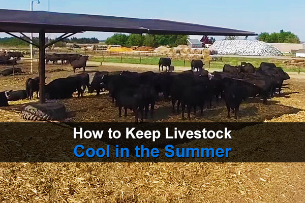 How to Keep Livestock Cool in the Summer