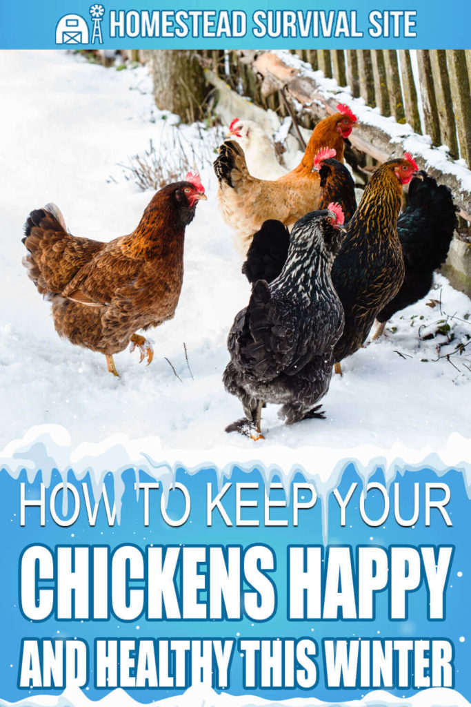 How To Keep Your Chickens Happy And Healthy This Winter