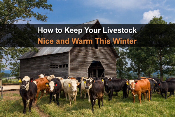 How to Keep Your Livestock Nice and Warm This Winter