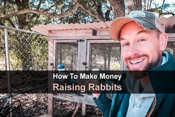 How To Make Money Raising Rabbits