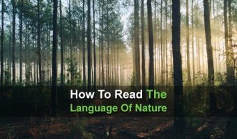 How To Read The Language Of Nature