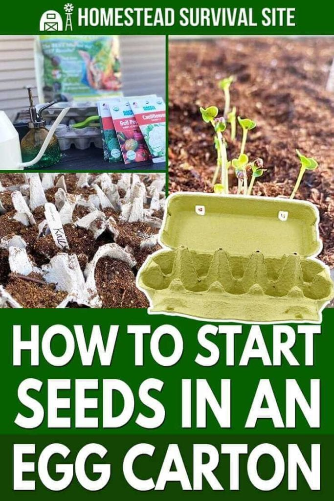 How to Start Seeds in an Egg Carton