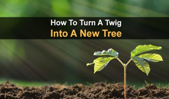 How To Turn A Twig Into A New Tree