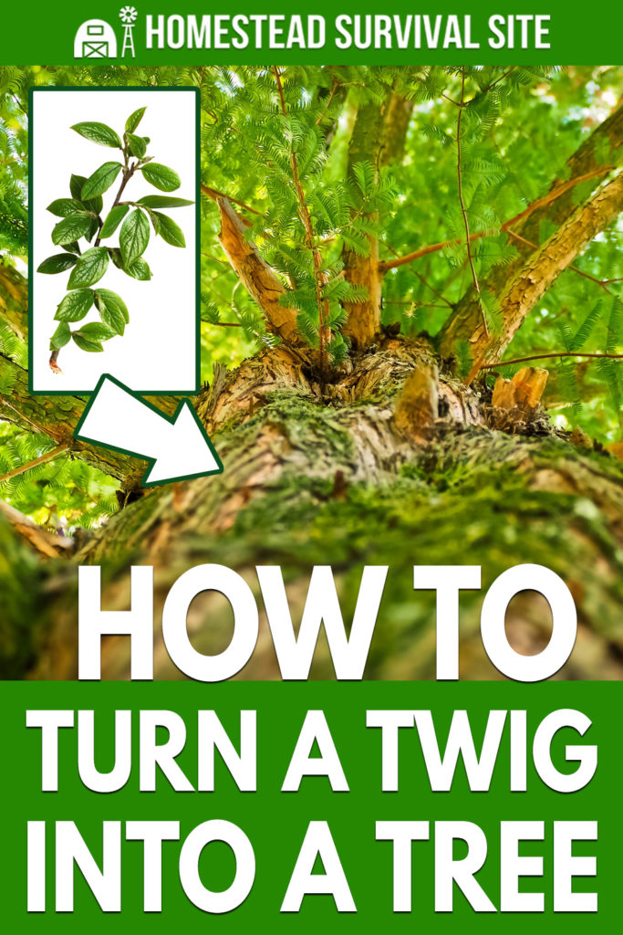 How To Turn A Twig Into A Tree