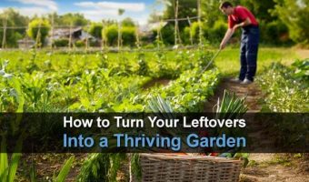 How To Turn Your Leftovers Into A Thriving Garden