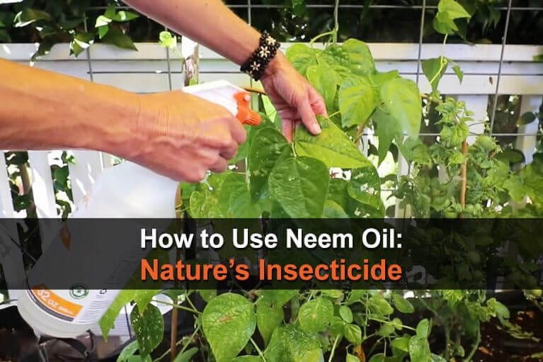 How to Use Neem Oil: Nature's Insecticide