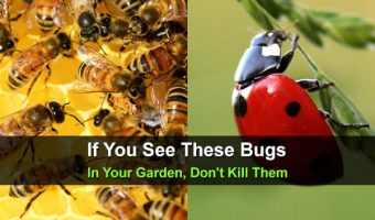 If You See These Bugs In Your Garden, Don't Kill Them