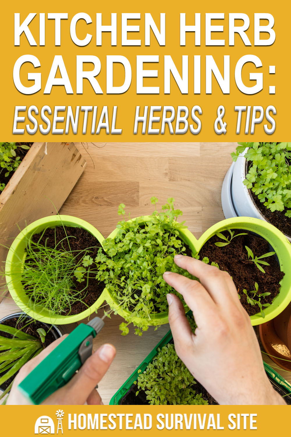 Kitchen Herb Gardening: Essential Herbs and Tips