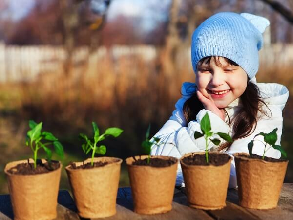 Little Girl Look At Seedlings In Planters