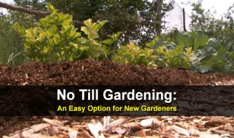 No Till Gardening: An Easy Option for New Gardeners