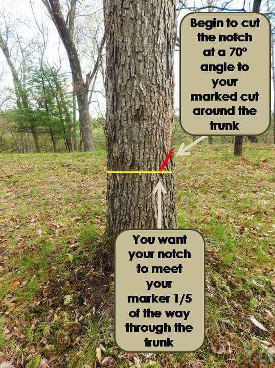 One-Fifth Rule for Notch Cuts