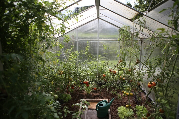Organic Garden In Greenhouse