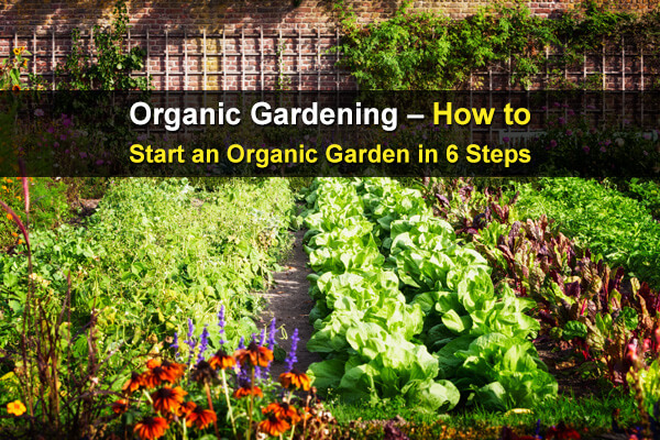 Organic Gardening – How to Start an Organic Garden in 6 Steps