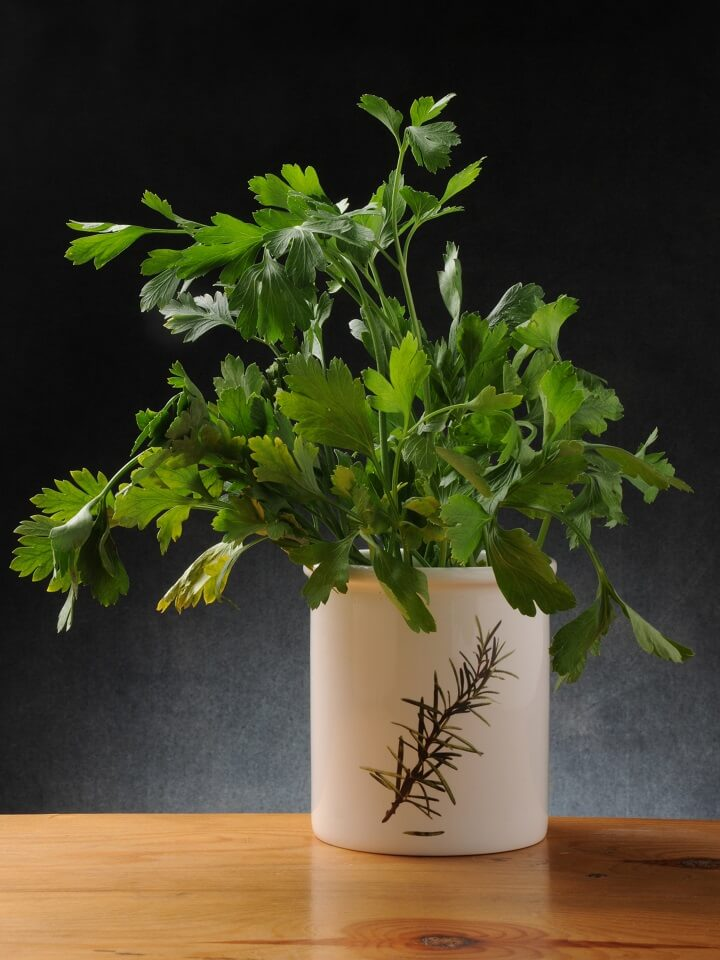 Parsley Plant In A Pot
