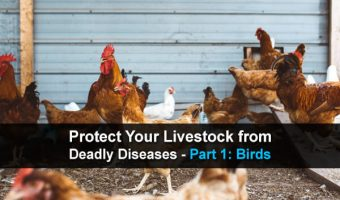 Protect Your Livestock from Deadly Diseases – Part 1: Birds