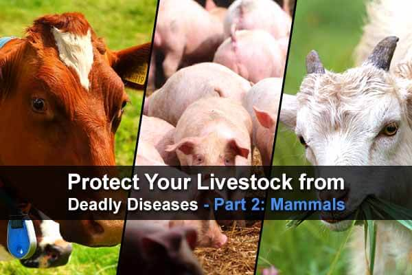 Protect Your Livestock from Deadly Diseases - Part 2: Mammals