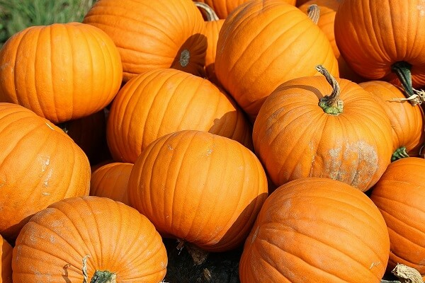 Pumpkins | Foods That Store Well in Root Cellars
