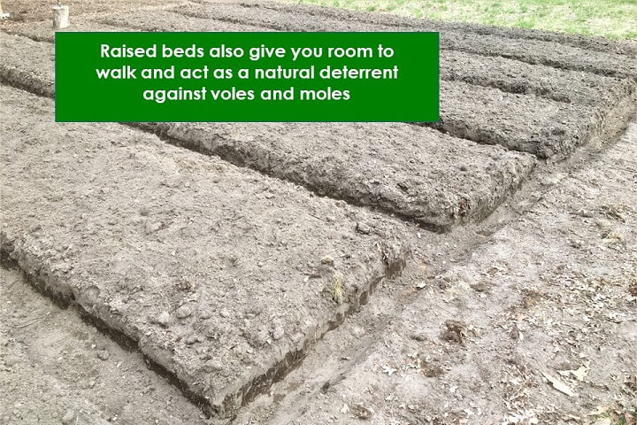 Raised Beds Detail