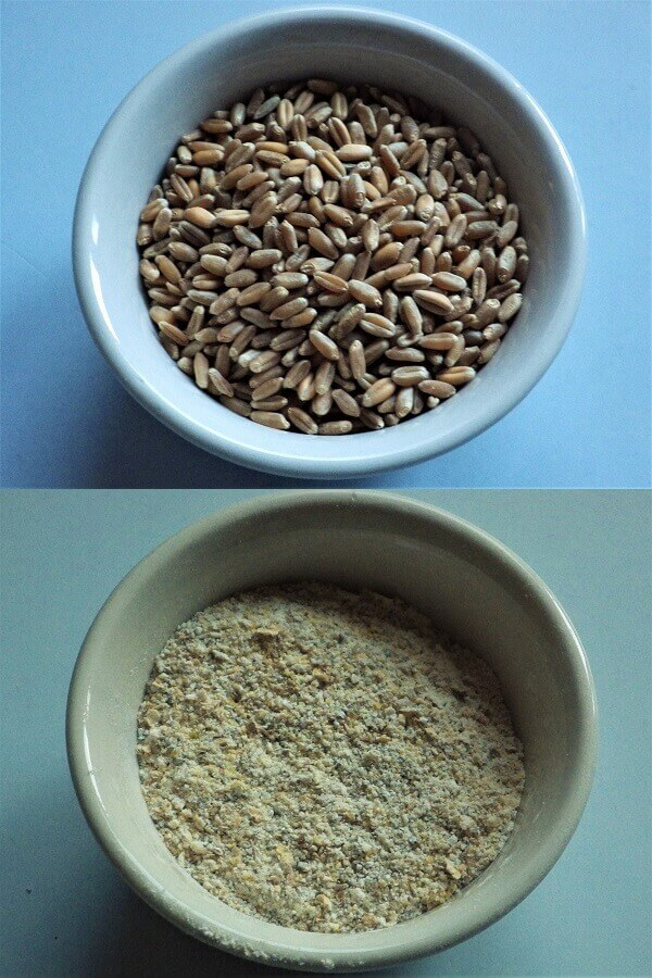 Red Winter Wheat Grains and Flour