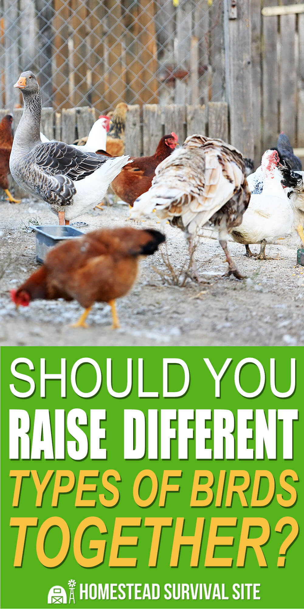 Should You Raise Different Types Of Birds Together?