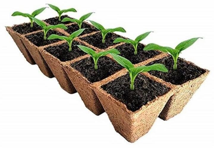 Start Seedlings Indoors