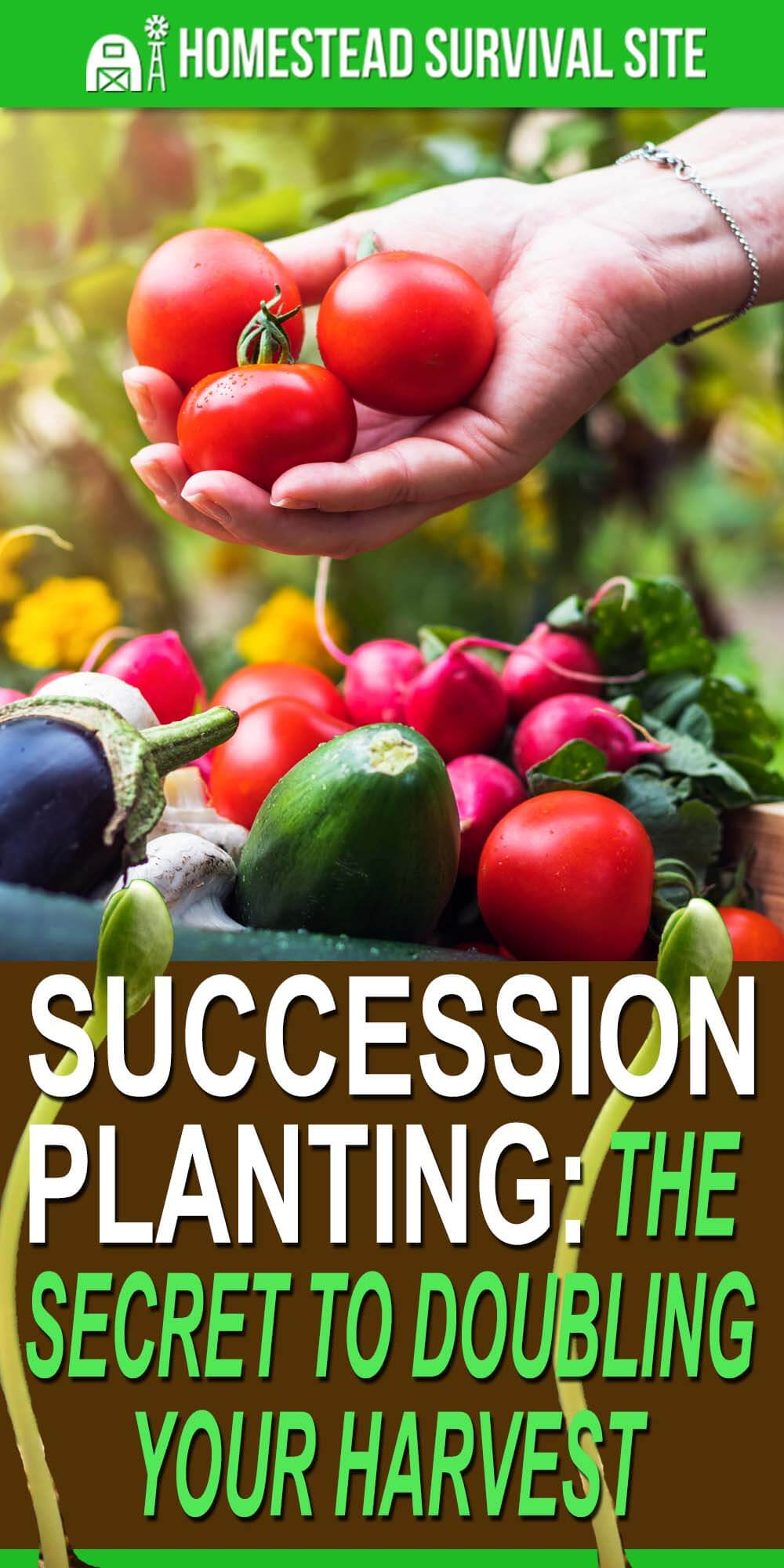 Succession Planting: The Secret to Doubling Your Harvest