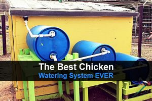 The Best Chicken Watering System EVER