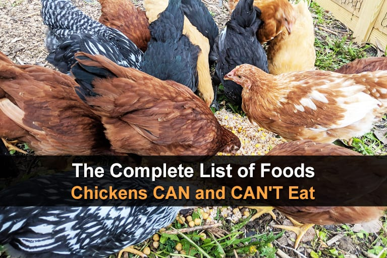 The Complete List of Foods Chickens CAN and CAN'T Eat